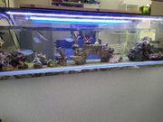 Neue Meerwasser Korallenableger