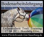 Bodenarbeitskurs Gelassenheit Trail Training