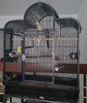 Große Vogelvoliere mit 2 Nymphensittichen