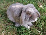 kastrierte Kaninchen Buben suchen dich