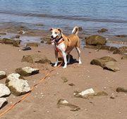 Tierschutzhund Lucky 4 Jahre sucht