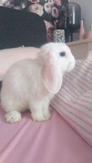 kaninchen mit käfig und zubehör