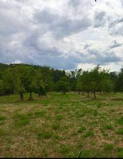 Obstbaumwiese Wiese Baumwiesen Weide