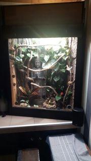 Terrarium komplett eingerichtet aus Osb