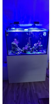 meerwasser aquarium komplett xxxl paket