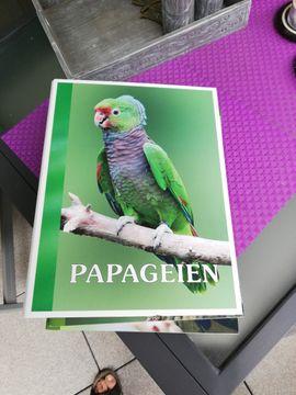 Papageien die Zeitschrift