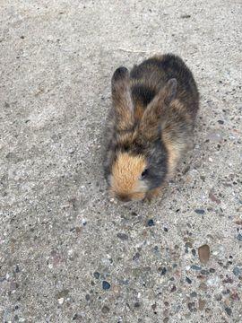 Kaninchenbaby: Kleinanzeigen aus Lotte - Rubrik Kleintiere