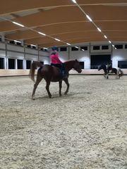 Pflegebeteiligung gesucht Reiter sucht Pferd