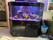 Meerwasser Aquarium 540 L samt