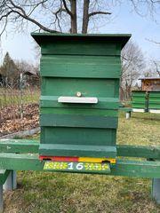 Bienenbeute Ablegerbeute zu verkaufen Zandermaß