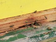 Ideal für Neuimker 2 Bienenvölker