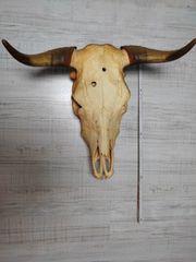 Bullenschädel Schädel Büffel