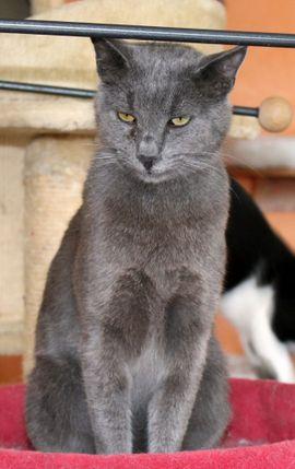 Katzen - Kater Mr Miez sucht Zuhause