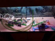 Aquarium komplett mit Allem