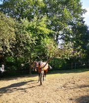 Pferdeboxen mit Paddocks Pferdestall