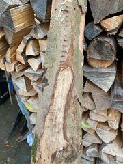 Brennholz Buche Kaminholz Feuerholz