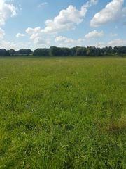 Wiese stehendes Gras