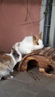 zwei kastrierte Kaninchen in gute