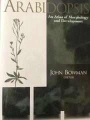 Arabidopsis An Atlas of Morphology