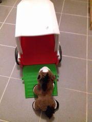 Bobbycar mit Pferedanhänger- super Weihnachtsgeschenk