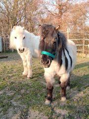Pony Pflegebeteiligung