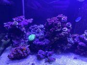 Meerwasser Lebendgestein Real Reef Rock
