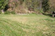 Wiesengrundstück in Waldrandlage in Erbach