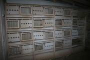 Taubenboxen Zuchtboxen