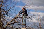Winterschnittarbeiten Baumwartarbeiten