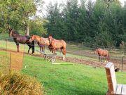 Pferdemist reine Pferde Äpfel organischer