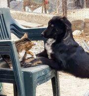 Hundebub ANDOR