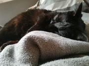 verschmustes Notfellchen Katze 12-13 J