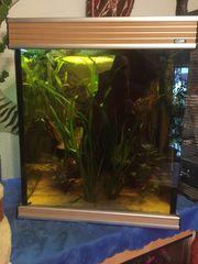 Super schönes Aquarium zu verkaufen