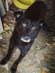 Lucia ist ein schwarzer Hund