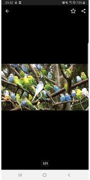 HalloIch nehme gerne Ihre Vögel
