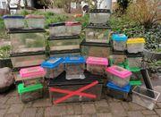 div Fauna Boxen abzugeben Vogelspinnen