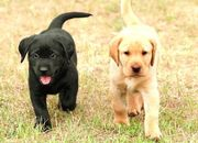 Suche einen Hundewelpen bis 1300