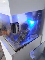 Meerwasser aquarium 60 Liter