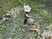 Überwinterungsplätze für Landschildkröten