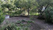 Obstgarten zu verpachten - zentral in
