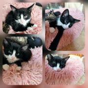 Kitten Baby Katze Jule geimpft