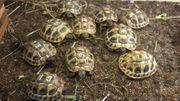 Schildkröten griech mit Papieren