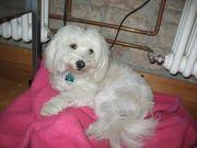 Hundesitter Tierpflegerin
