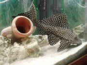 Aquarium komplett m viel Zubehör