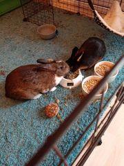 2 Kaninchen Abzugeben bitte helfen
