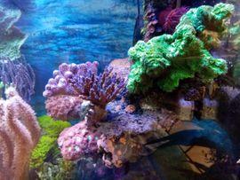 Einmaliges Riff, Floating Reef, LPS, SPS, Meerwasser Aquarium TOP !!