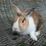 Lieber Kaninchen Kastrat Lucky sucht