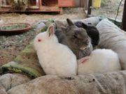 Junge Zwerg Kaninchen Kinder in