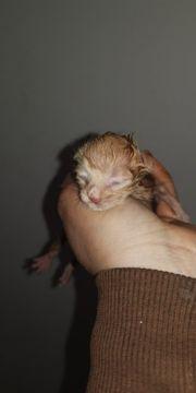 handaufzucht für Tiere in Not