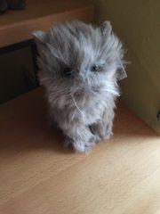 Ein Kuscheltier Katze von Penny